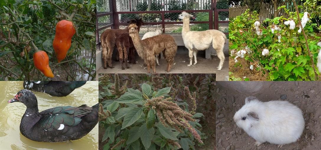 Conoce el Parque de Flora y Fauna Nativas